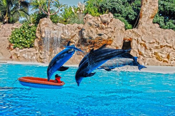 Show de golfinhos no Loro Park