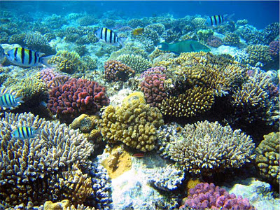 a-grande-barreira-de-corais-australiana