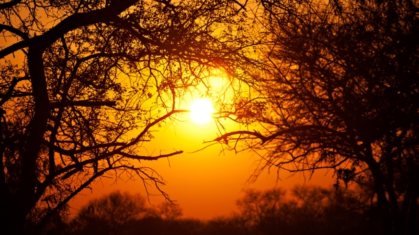 154683-kruger-national-park-park-south-africa-sun-sunset-trees