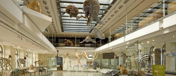 interior-do-museu-de-historia-natural-de-los-angeles-foto-tom-bonnerdivulgacao